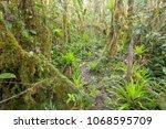 interior of mossy montane...   Shutterstock . vector #1068595709