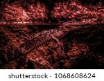 small wild crocodile  detail of ... | Shutterstock . vector #1068608624