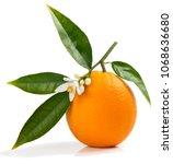 One Orange Fruit On A...