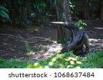 anteater  myrmecophaga... | Shutterstock . vector #1068637484
