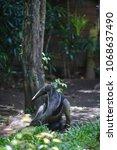 anteater  myrmecophaga... | Shutterstock . vector #1068637490