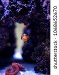 fish coral reef | Shutterstock . vector #1068652670