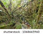 blackwater stream in mossy...   Shutterstock . vector #1068665960