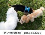 Three  3  Dogs Greeting Each...