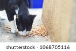 cat eating  kibble on the floor  | Shutterstock . vector #1068705116