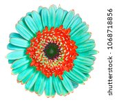 flower  cyan red gerbera... | Shutterstock . vector #1068718856