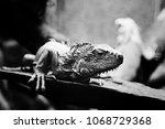 st. petersburg  russia   may 01 ... | Shutterstock . vector #1068729368