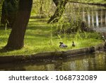 Ducks In A Park By A Pond On A...