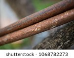 rust and tree durability | Shutterstock . vector #1068782273