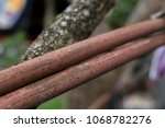rust and tree durability | Shutterstock . vector #1068782276
