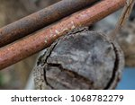 rust and tree durability | Shutterstock . vector #1068782279