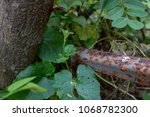 rust and tree durability | Shutterstock . vector #1068782300