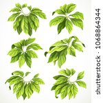 set of six big leaves of a... | Shutterstock .eps vector #1068864344