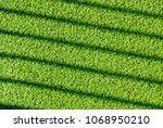 lemna or common duckweed...   Shutterstock . vector #1068950210