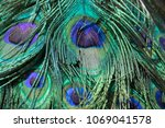 peacock feather plumage  macro... | Shutterstock . vector #1069041578