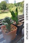 pot of cactus   Shutterstock . vector #1069048826