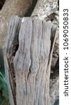 bark tree texture background   Shutterstock . vector #1069050833