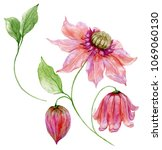 beautiful pink clematis on a... | Shutterstock . vector #1069060130