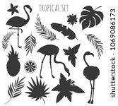 Grey Tropical Plants And...