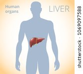 the location of the liver in... | Shutterstock .eps vector #1069097588