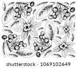 Berry Fruit  Illustration...
