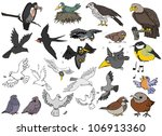 a large variety of birds on a... | Shutterstock .eps vector #106913360