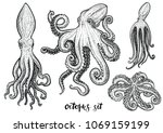 Octopus Hand Drawn Vector...