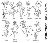set of wildflowers with latin... | Shutterstock .eps vector #1069166096