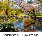 springtime blossom in the... | Shutterstock . vector #1069195589
