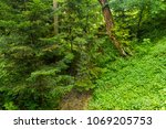 thickets in the woods | Shutterstock . vector #1069205753