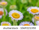 close up of soft purple flowers ... | Shutterstock . vector #1069221350
