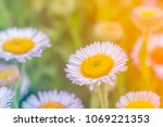 close up of soft purple flowers ... | Shutterstock . vector #1069221353