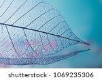 group of skeleton leaves on... | Shutterstock . vector #1069235306