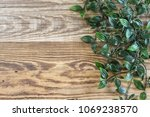 fresh green vine with many... | Shutterstock . vector #1069238570