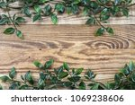 fresh green vine with many... | Shutterstock . vector #1069238606