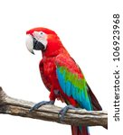 Colorful Macaw Isolated On...