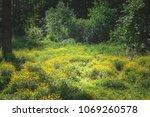 landscape photography of fresh... | Shutterstock . vector #1069260578