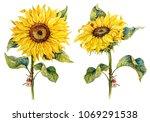 botanical sunflowers.... | Shutterstock . vector #1069291538