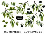 black and green olives branches ...   Shutterstock .eps vector #1069295318