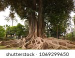 an interesting old tree  spain  ... | Shutterstock . vector #1069299650