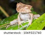 the extremely rare and...   Shutterstock . vector #1069321760
