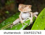 the extremely rare and...   Shutterstock . vector #1069321763