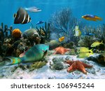 Coral Garden With Starfish And...