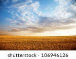 Summer Landscape   Wheat Field...