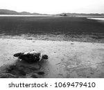 Dead Sea Turtle At Mersing Beach