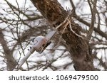 pole saw  tree trimming ... | Shutterstock . vector #1069479500
