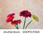 cut flowers home. five... | Shutterstock . vector #1069515560