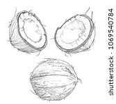 hand drawn coconut  vintage ink ... | Shutterstock .eps vector #1069540784