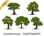 collection beautiful tree... | Shutterstock .eps vector #1069566053