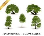 collection beautiful tree... | Shutterstock .eps vector #1069566056